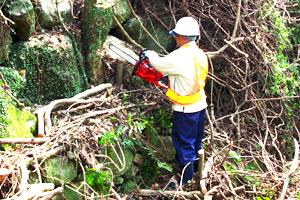 間伐材等由来の木質バイオマス