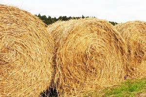 一般木質バイオマス・農作物の収穫に伴って生じるバイオマス